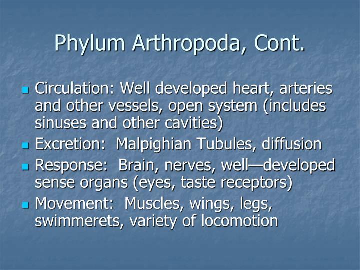 Phylum Arthropoda, Cont.