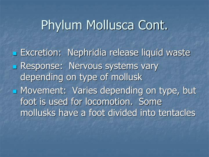 Phylum Mollusca Cont.