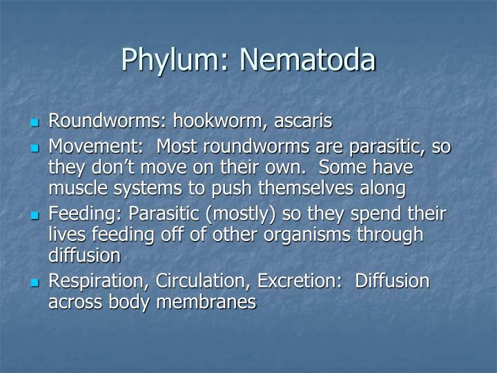 Phylum: Nematoda