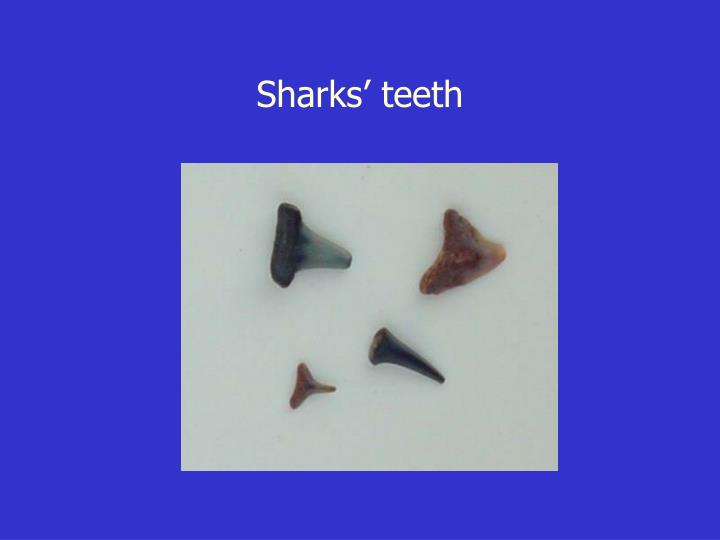 Sharks' teeth