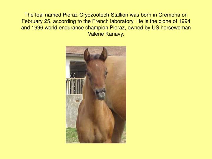 The foal named Pieraz-Cryozootech-Stallion was born in Cremona on February 25, according to the French laboratory. He is the clone of 1994 and 1996 world endurance champion Pieraz, owned by US horsewoman Valerie Kanavy.