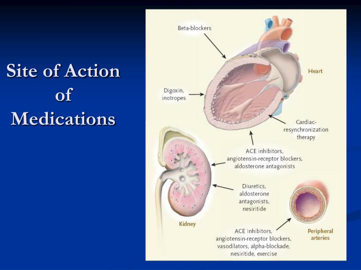 Site of Action of Medications