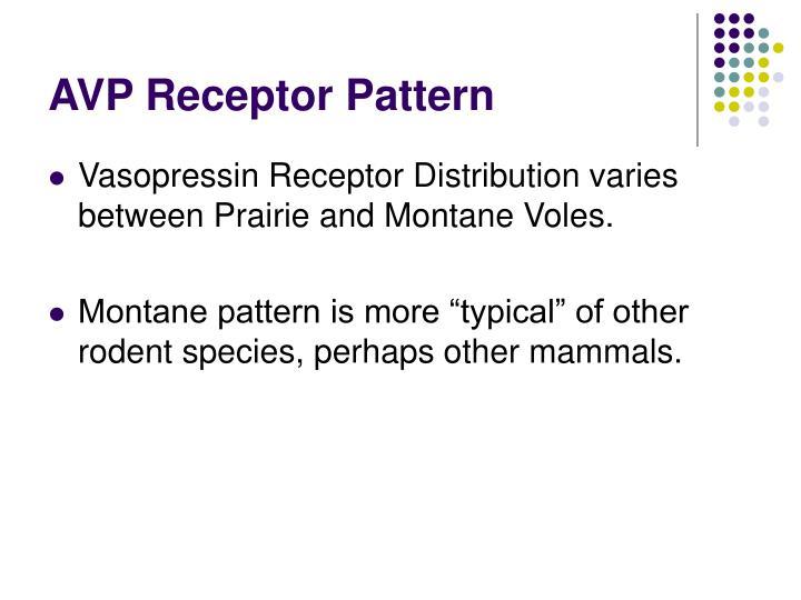 AVP Receptor Pattern