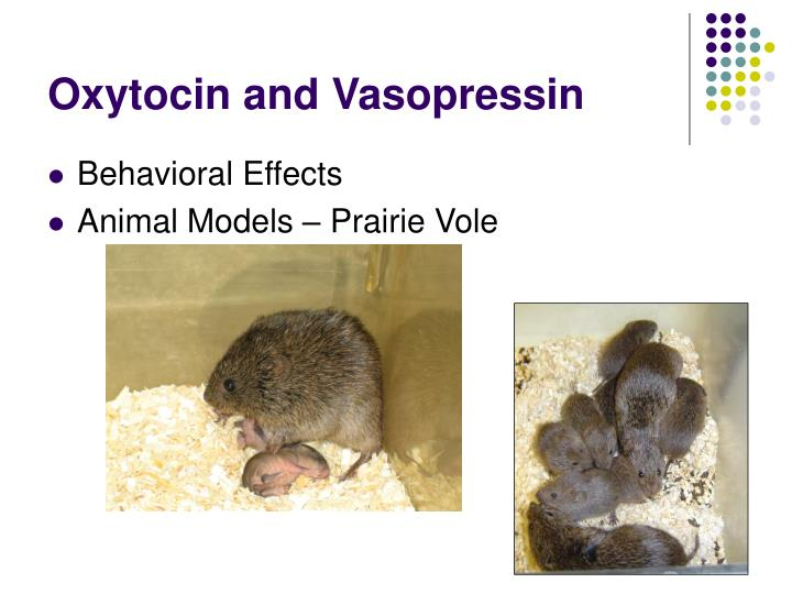 Oxytocin and Vasopressin