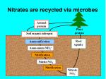 nitrates are recycled via microbes