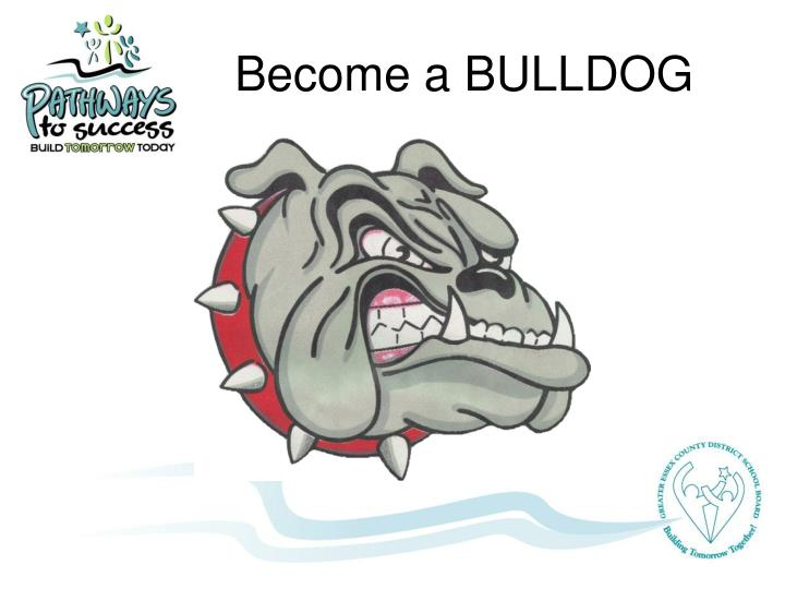Become a BULLDOG