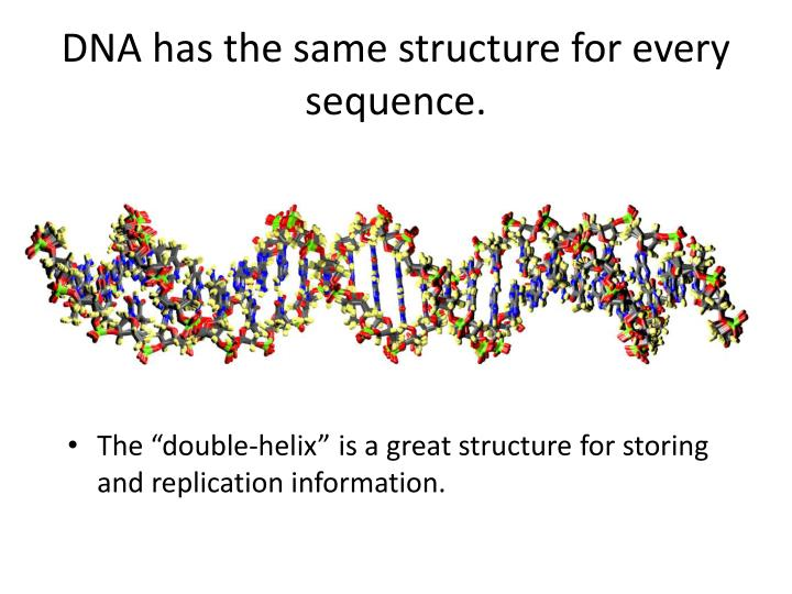 DNA has the same structure for every sequence.