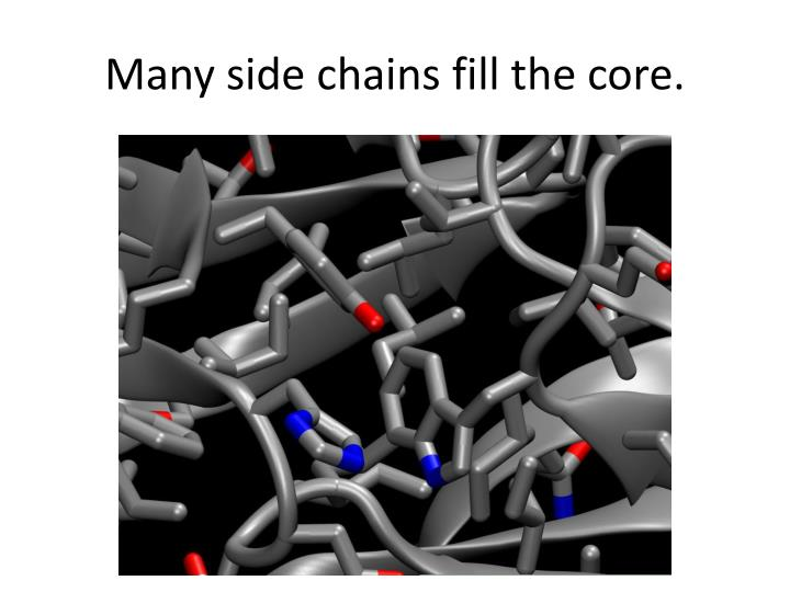 Many side chains fill the core.