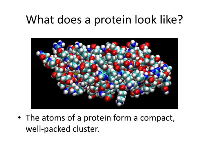 What does a protein look like?