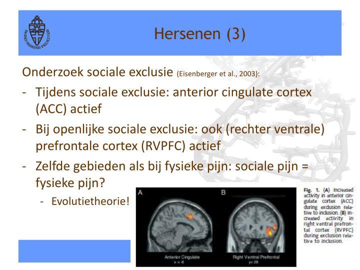 Hersenen (3)