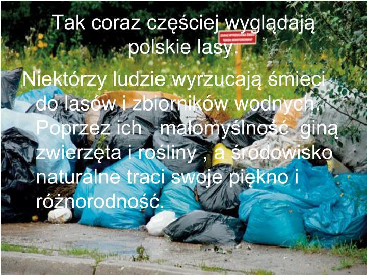 Tak coraz częściej wyglądają polskie lasy.