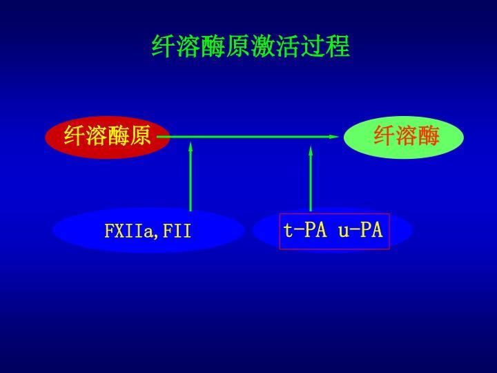 纤溶酶原激活过程