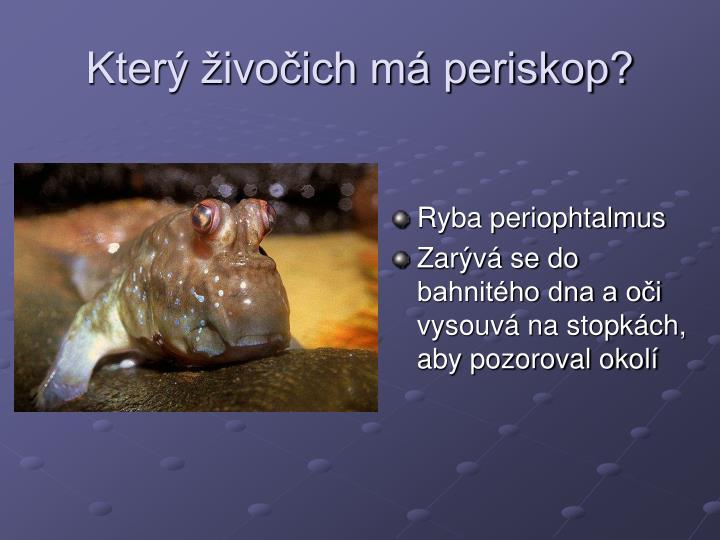 Který živočich má periskop?