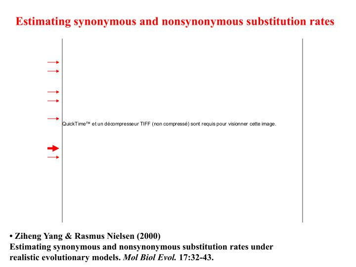 Estimating synonymous and nonsynonymous substitution rates