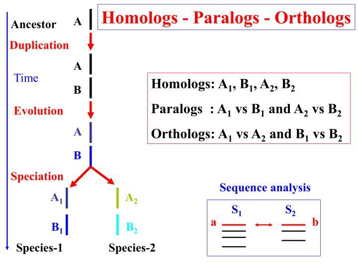 Homologs - Paralogs - Orthologs