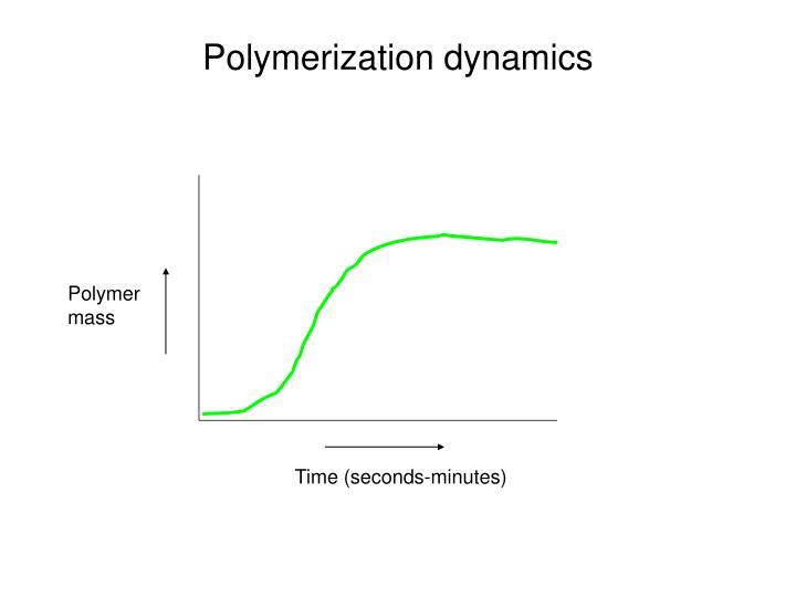 Polymerization dynamics