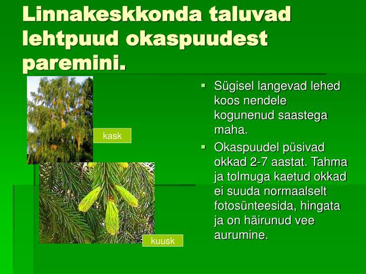 Linnakeskkonda taluvad lehtpuud okaspuudest paremini.