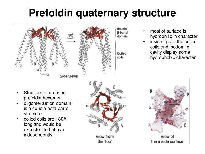 Prefoldin quaternary structure