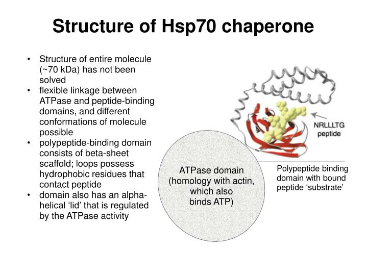 Structure of Hsp70 chaperone