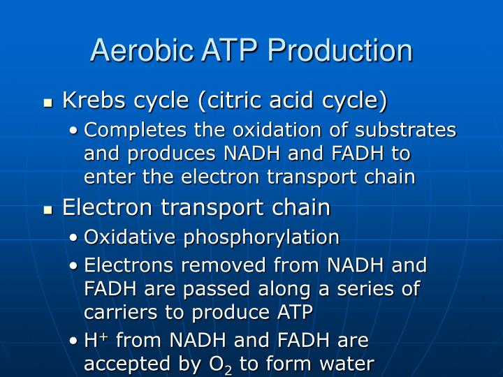Aerobic ATP Production