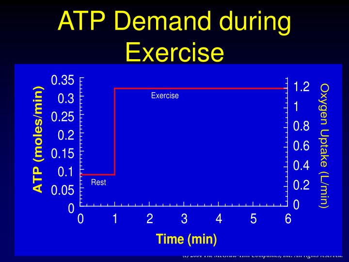 ATP Demand during Exercise