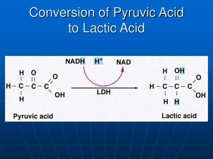 Conversion of Pyruvic Acid
