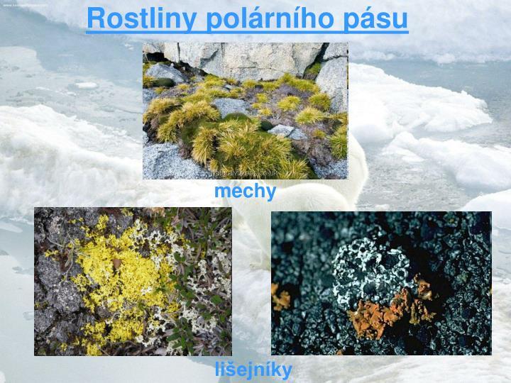 Rostliny polárního pásu