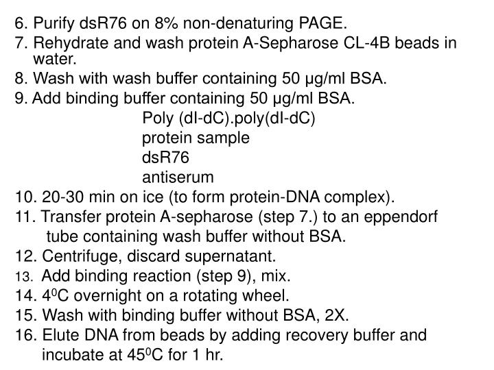 6. Purify dsR76 on 8% non-denaturing PAGE.
