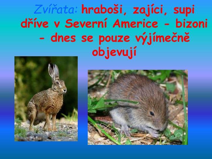 Zvířata: