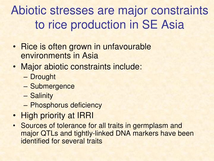 Abiotic stresses are major constraints to rice production in SE Asia