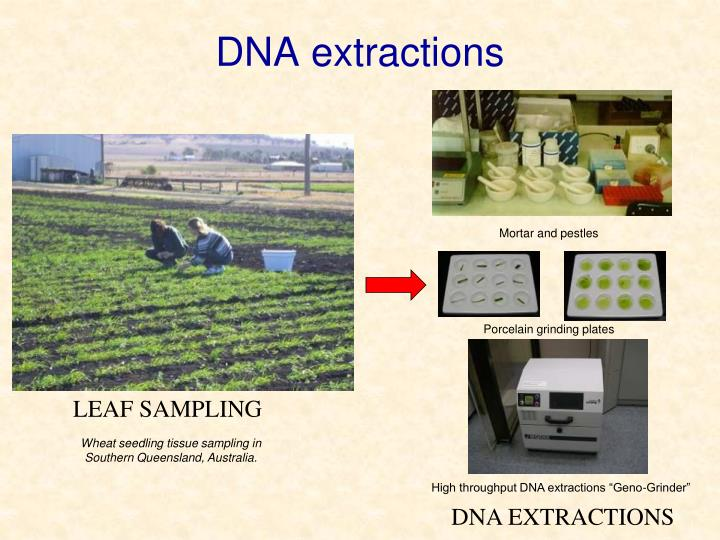 DNA extractions