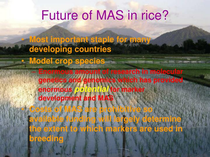 Future of MAS in rice?