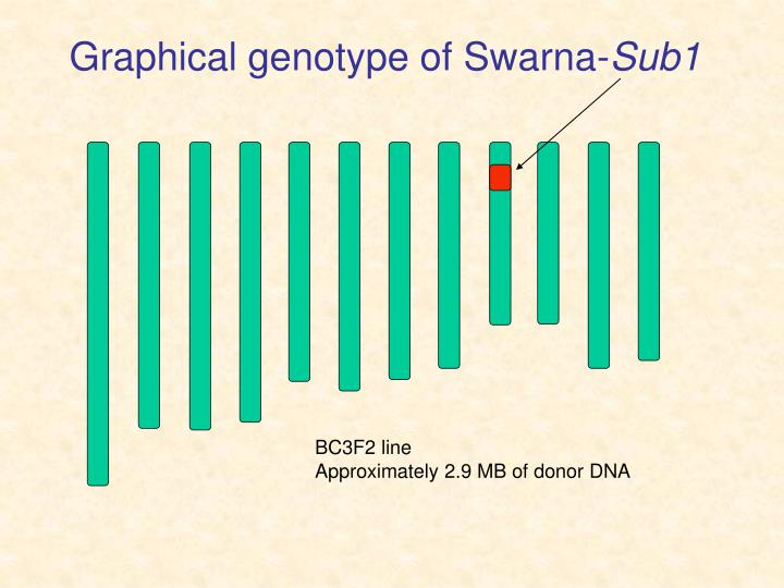 Graphical genotype of Swarna-