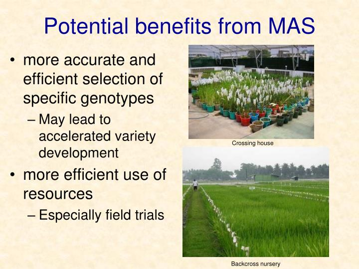 Potential benefits from MAS