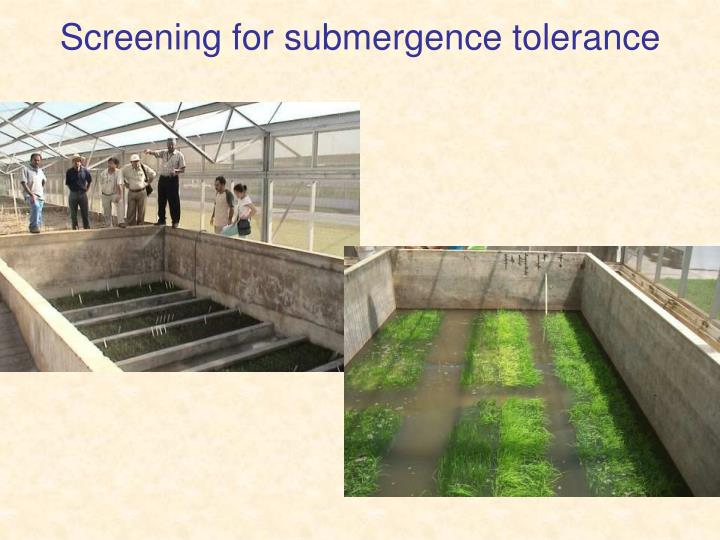 Screening for submergence tolerance