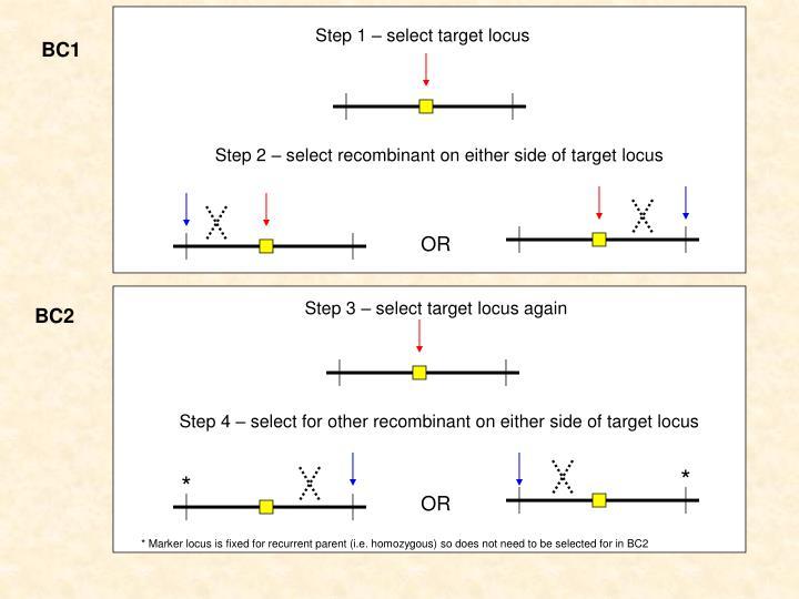 Step 3 – select target locus again