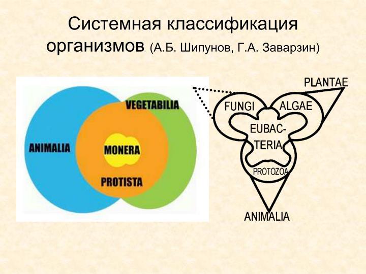 Системная классификация организмов
