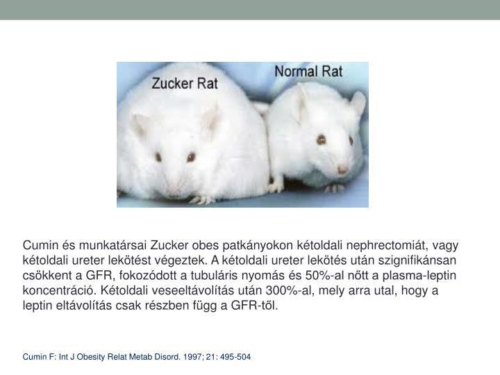 Cumin s munkatrsai Zucker obes patknyokon ktoldali nephrectomit, vagy ktoldali ureter lektst vgeztek. A ktoldali ureter lekts utn szignifiknsan cskkent a GFR, fokozdott a tubulris nyoms s 50%-al ntt a plasma-leptin koncentrci. Ktoldali veseeltvolts utn 300%-al, mely arra utal, hogy a leptin eltvolts csak rszben fgg a GFR-tl.