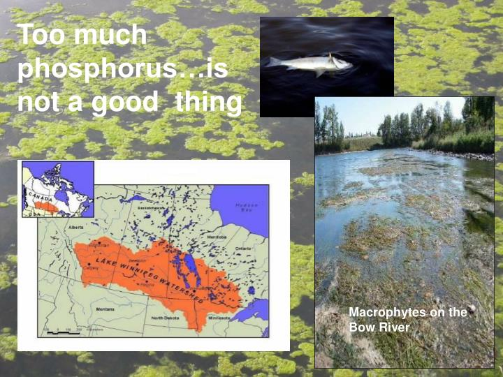 Too much phosphorus…is not a good  thing