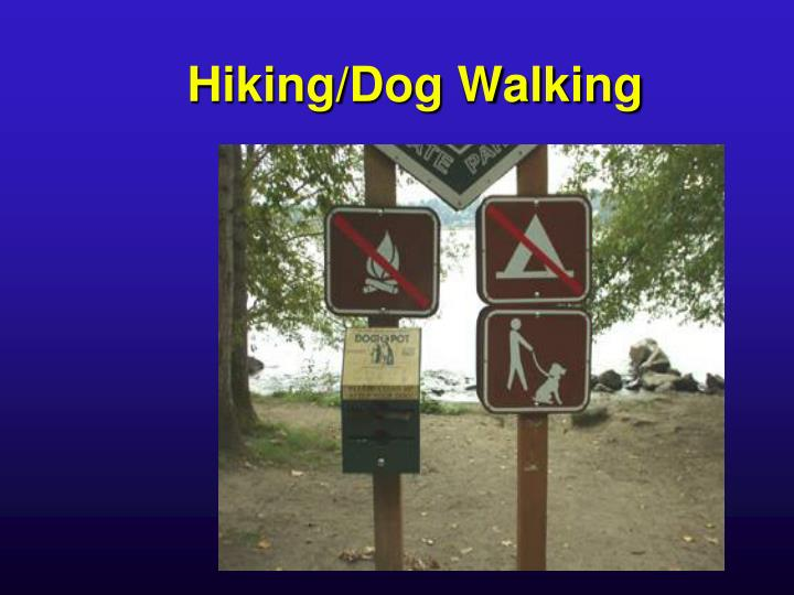 Hiking/Dog Walking