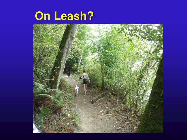 On Leash?