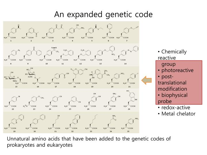 An expanded genetic code