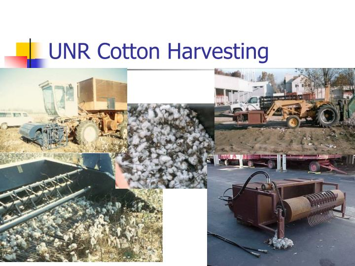 UNR Cotton Harvesting