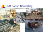 unr cotton harvesting
