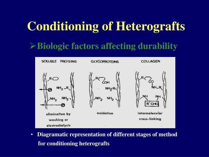 Conditioning of Heterografts