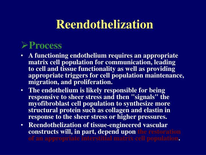 Reendothelization