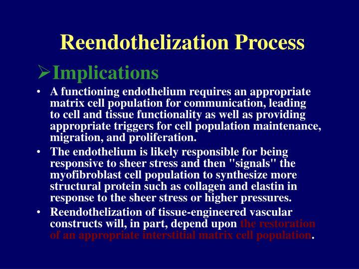 Reendothelization Process
