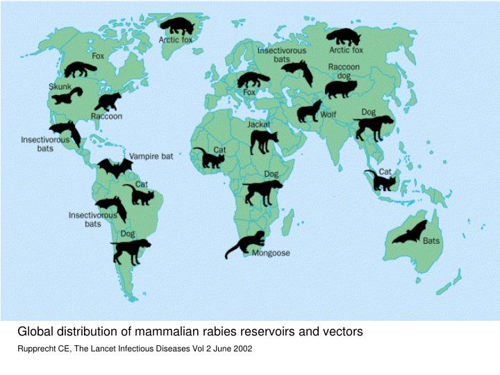 Global distribution of mammalian rabies reservoirs and vectors