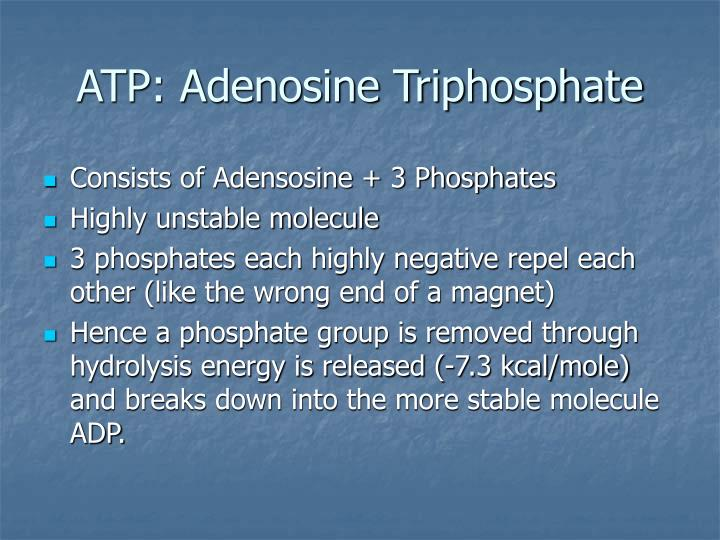 ATP: Adenosine Triphosphate