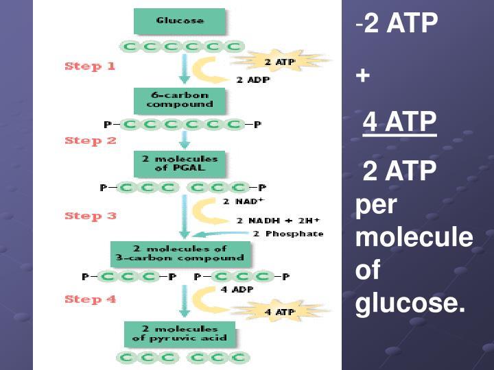 2 ATP